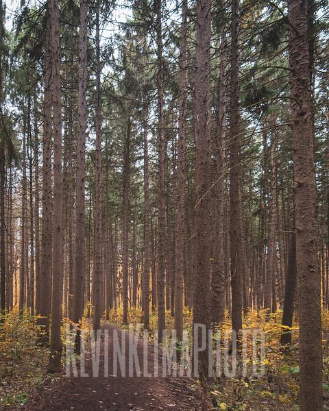 arboretum-oct2018-27.jpg