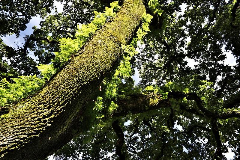 Na žádost vyfocený strom, porostlý kapradím
