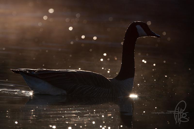 sm starry night_MG_6929.jpg