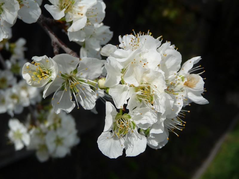 spring flowers-1000750.jpg