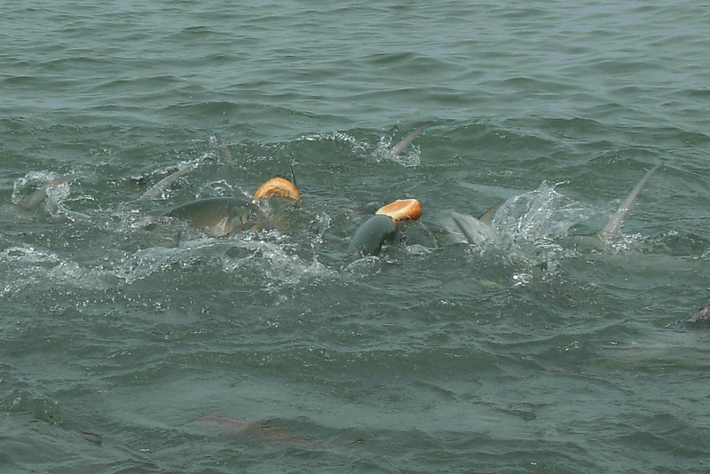 Fish Feeding 5.jpg