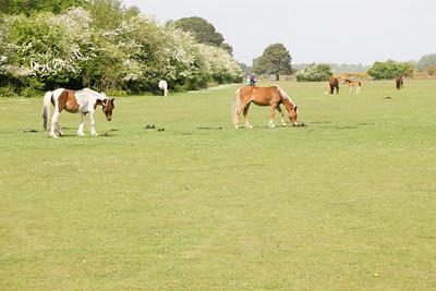 UK May 2009