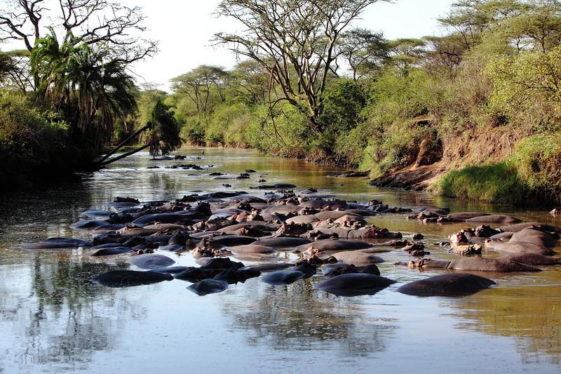 Hippos in Retina River.JPG