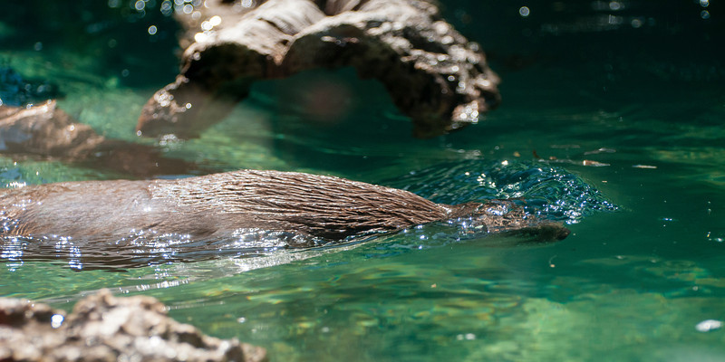 Otters!