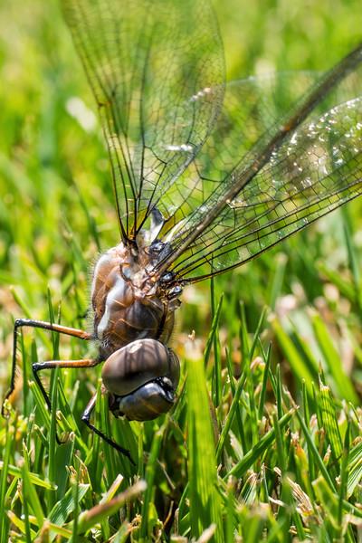 dragonfly?-03.jpg