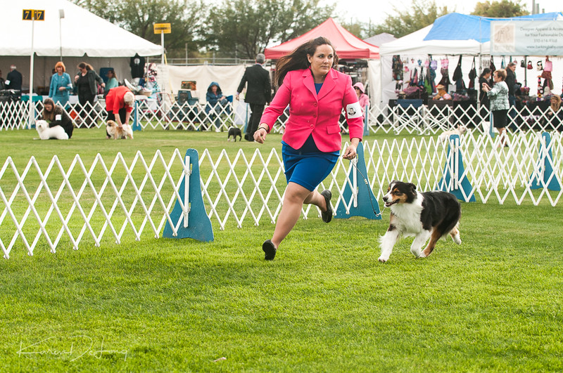 20170114_Kachina Kennel Club_Aussies-67.jpg