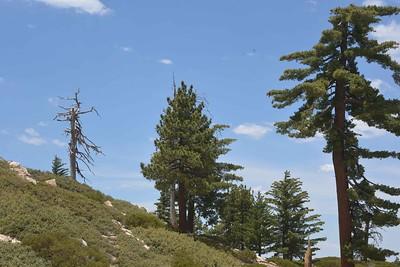 Big Bear Snow Valley Mountain Resort