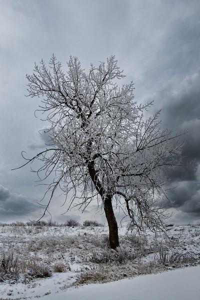 SnowyTreeErieCO-001