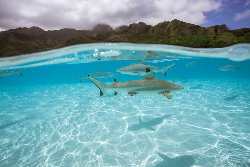 sharks-1-4.jpg