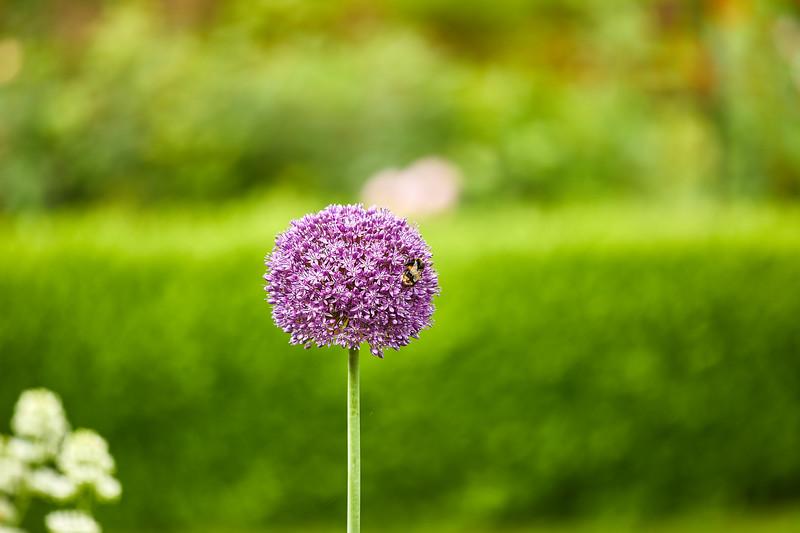Flowers-5448.jpg
