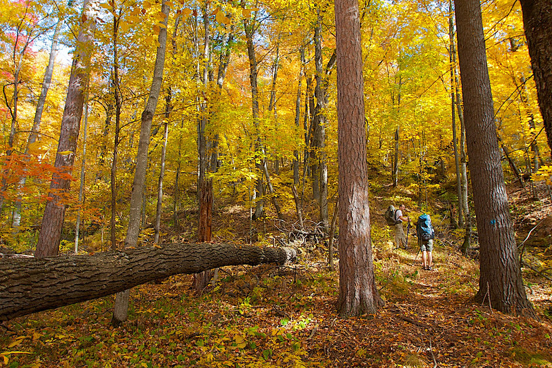 A beautiful forest covers the steep bank of the St. Croix.