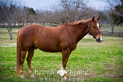 2012 horse adoption photos