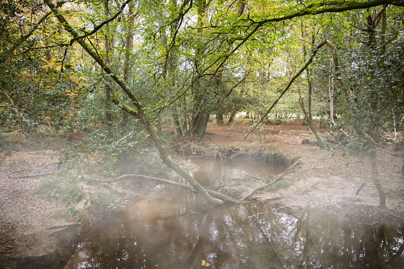 New Forest Oct 2019  001On1