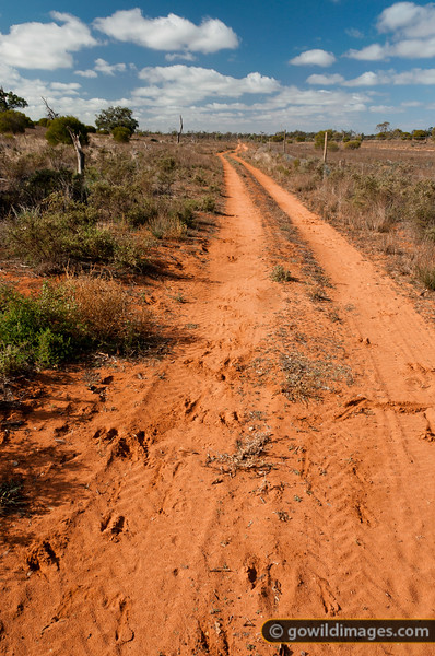 A kangaroo-proof fence runs along the right of this track, protecting the Hattah-Kulkyne NP. Emu and kangaroo tracks can be seen in the red, sandy dirt.