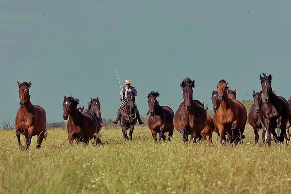 I butteri di maremma - les chevaux