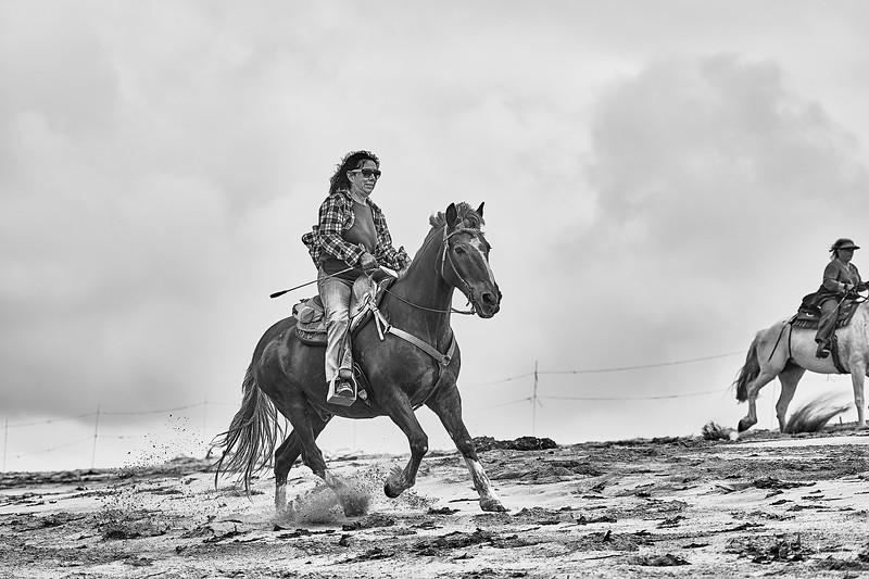 _DSC20630155@Catherine Aranda-LearnedOceanMeadowview©CAL..jpg