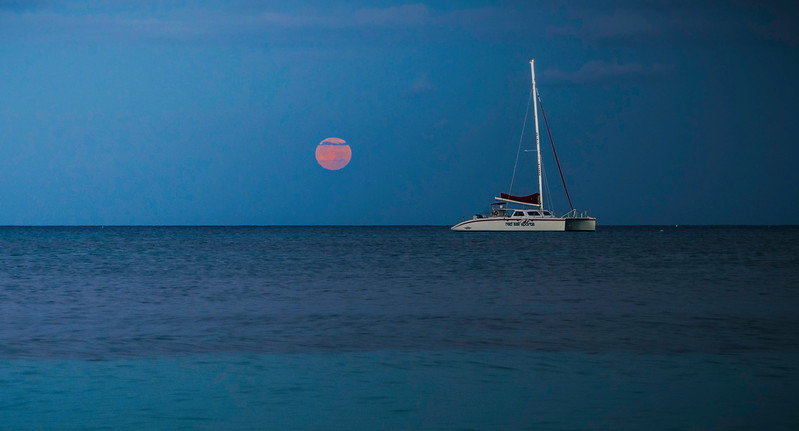 Cayman Cat.jpg