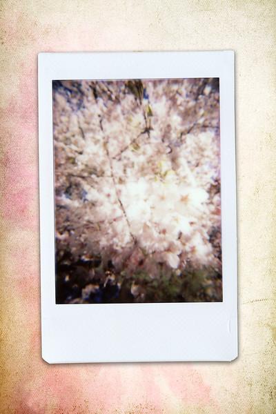 170430_ARD-cherryblossoms_INSTAX07.jpg