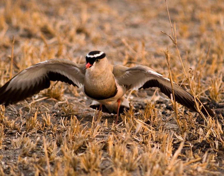 bird (2).jpg