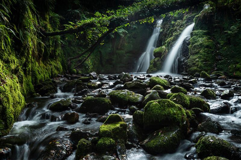 Vennford Brook Falls