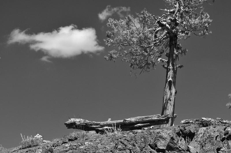 cloud and tree 8-5-2011.jpg