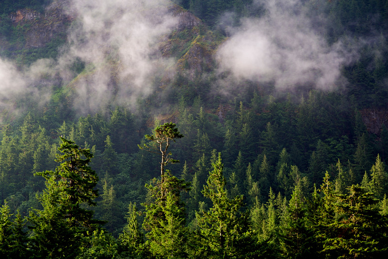 Morning fog in the Columbia River Gorge