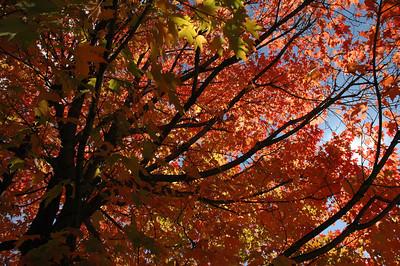 2010 Fall Colors