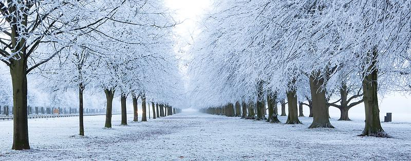 Hoar frost 8.jpg