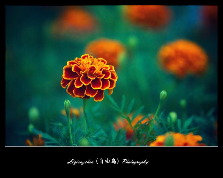 IMG_3311-L.jpg
