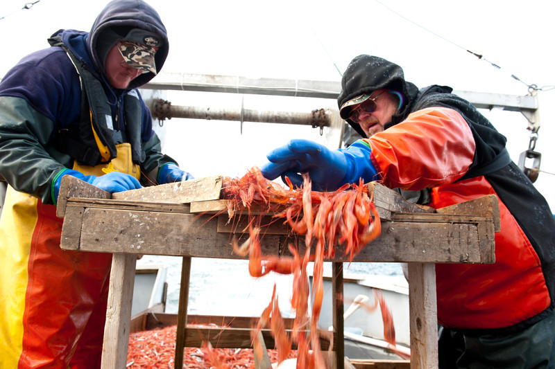 9. Shrimping with Proctor Wells, Gulf of Maine, February 2013.