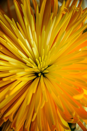 FlowerGiftErieCO-005