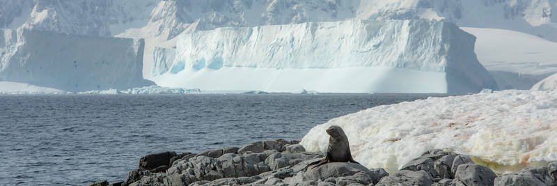 2019_01_Antarktis_05846.jpg