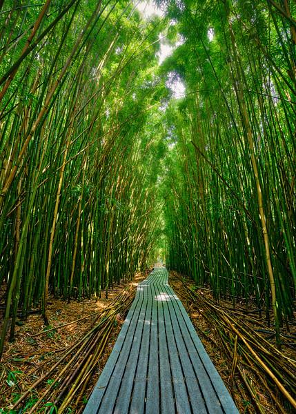 Maui - Bamboo Path