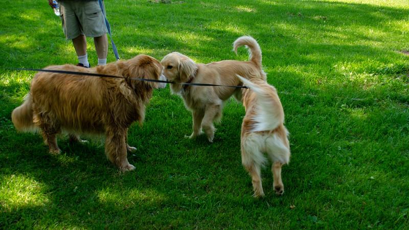 PuppyParty18-523.jpg
