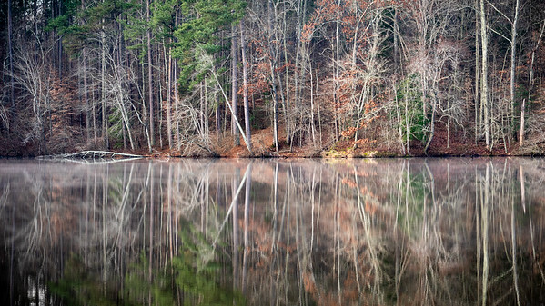 Maples Creek Reflection