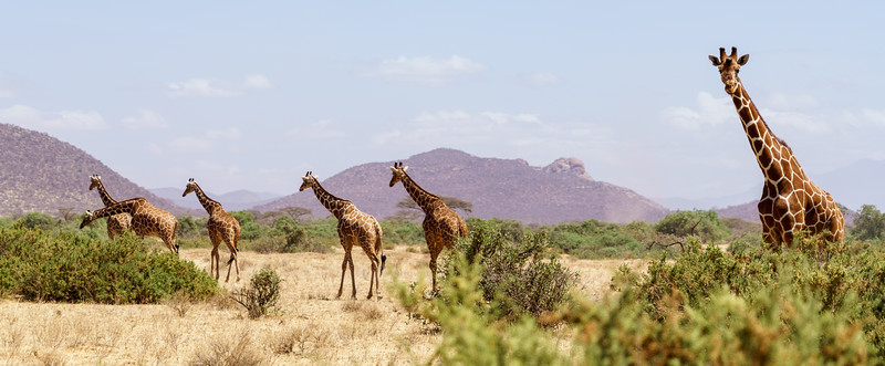 Kenya 2015-00861.jpg