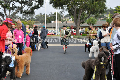 Poodle Day 2010 - Parade