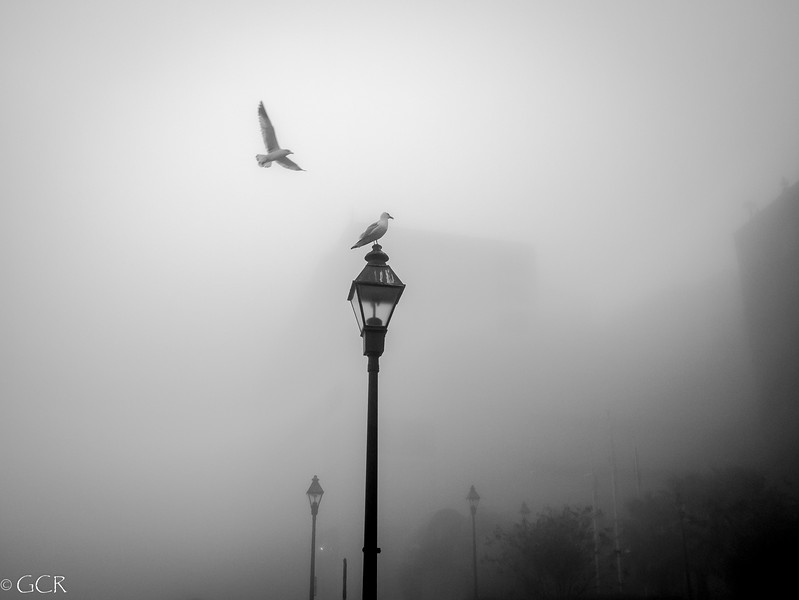 2 Gulls in the Morning B&W (1 of 1).jpg