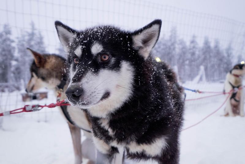 Finland_160116_28.jpg