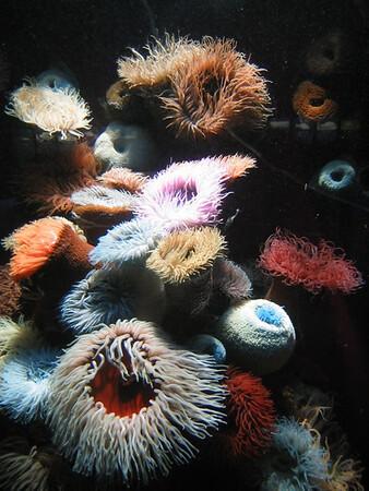 Cape Town Aquarium