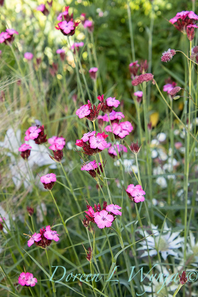 Pettifer's Garden - Virginia Price designer_1019.jpg