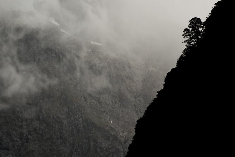 tree sillouhette in fiordlands-1.jpg