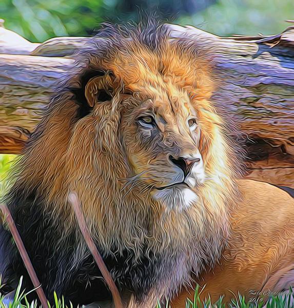 T_Lion4Clinton_FeathersandfursII.jpg