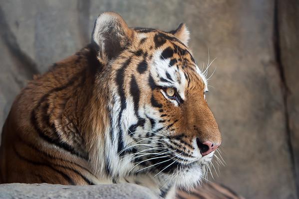 Columbus Zoo November