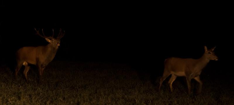I nattens mulm og mørke 2-068.jpg