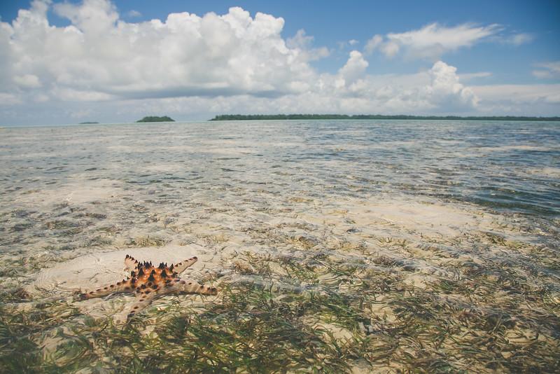 Palau 4.2014-68.jpg