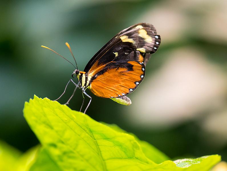 Butterfly 21.jpg