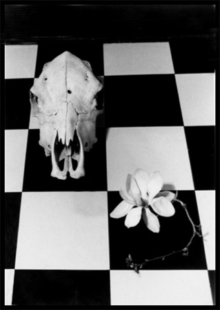 I made this photo as an homage to artist Georgia O'Keffe. We share a love of flowers and skulls.