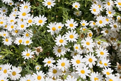 03-05-2008_12-15-31.jpg