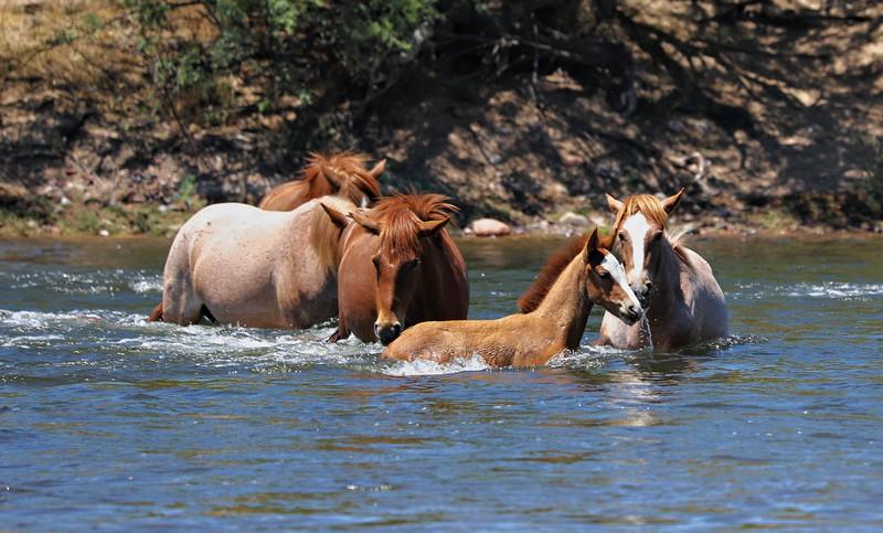 Memorial Day at Salt River Wild Horses Mon May  27 2019 284_pe_pe.jpg